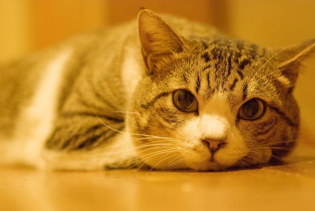 【インスタグラム】フォローせずにはいられない!可愛すぎると人気の猫アカウント9選