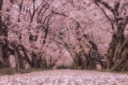 【関西】2019年の桜開花は3月26日頃から!おすすめの桜名所12選